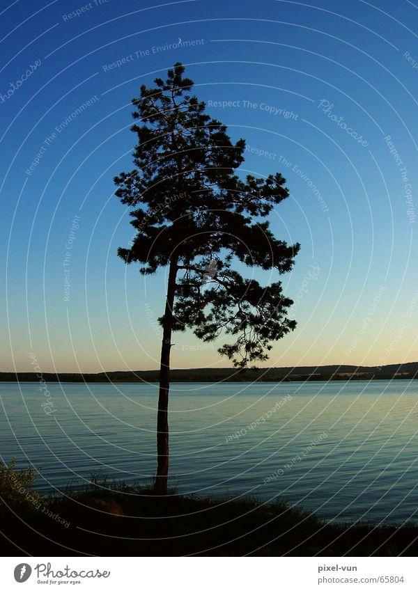 Entspannung Baum Tanne einzeln ruhig Idylle Romantik Erholung Abend Dämmerung See Stausee Horizont dezent Licht Gedanke Frieden friedlich Abenddämmerung Wasser