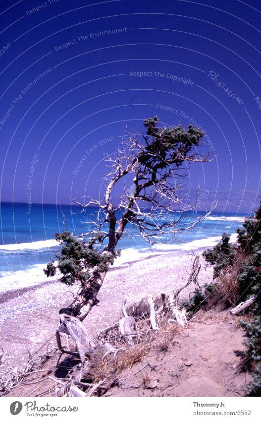 Einsamkeit am Strand Meer Sträucher Baum stehen Wasser Sand