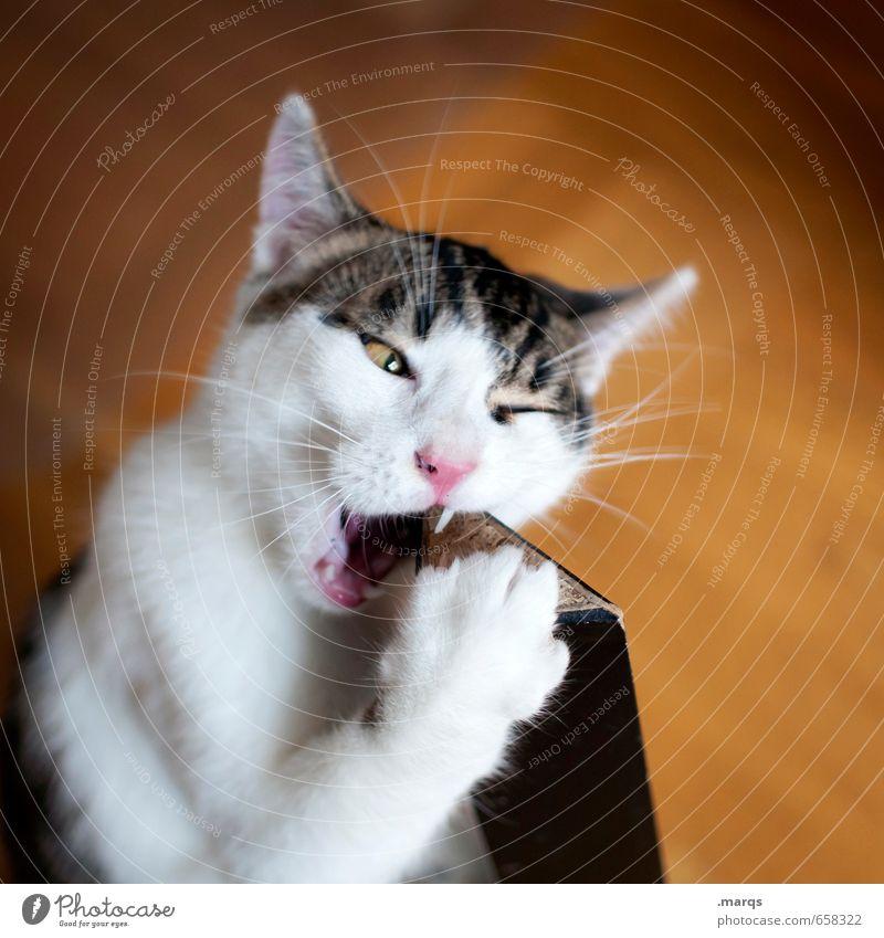 Kosten Haustier Katze 1 Tier Tierjunges entdecken Essen Neugier beißen wahrnehmen Farbfoto Innenaufnahme Nahaufnahme Tag