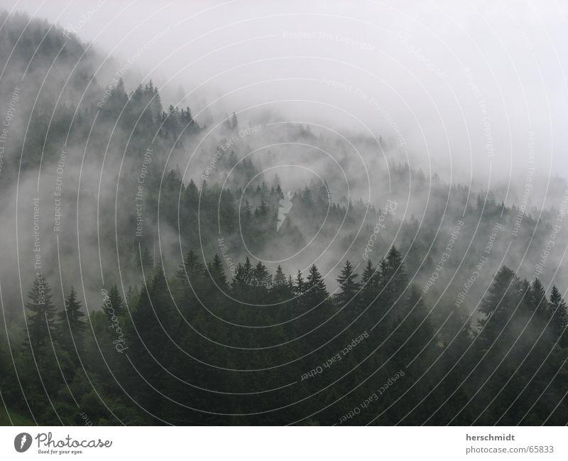 Dunkler Wald Nebel Baum dunkel Tanne Wolken Berge u. Gebirge gruselich