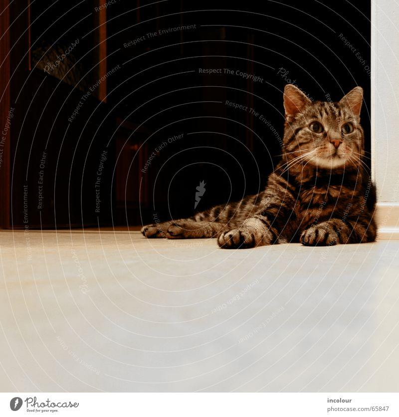 chillout Katze Tier ruhig Tierjunges braun liegen niedlich Gelassenheit Wachsamkeit Pfote Hauskatze bequem achtsam Katzenbaby Schnurren Tigerfellmuster