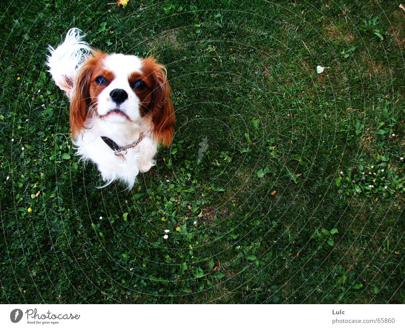 Walther Natur springen dog puppy grass play earth