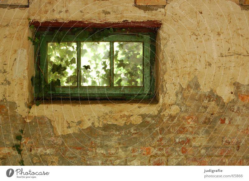 Garagenromantik Haus Gebäude Fenster Putz Wand Mauer grün Efeu Ranke Licht verfallen Demontage Romantik durchsichtig Durchblick Aussicht Pflanze alt Einsamkeit