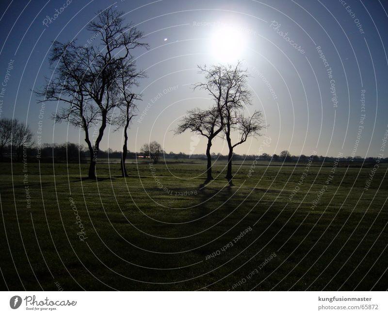 Dezembermond Baum Winter Landschaft Stern Mond Himmelskörper & Weltall Vollmond