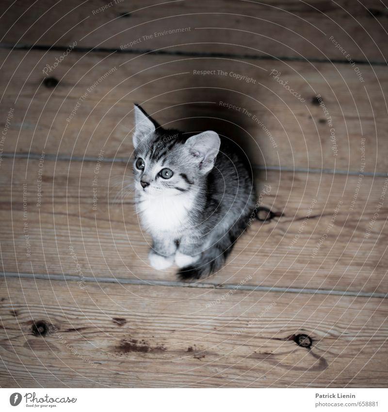 Katzenleben Tier Haustier 1 Tierjunges außergewöhnlich frech schön einzigartig lustig Neugier niedlich rebellisch Stimmung Zufriedenheit Lebensfreude