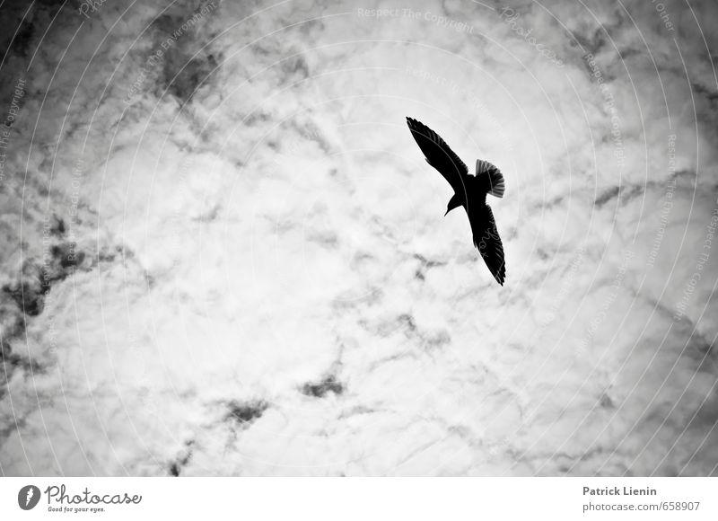 Einzelflieger Wohlgefühl Zufriedenheit Sinnesorgane Erholung ruhig Umwelt Natur Landschaft Urelemente Himmel Wolken Sonne Sonnenlicht Tier Wildtier Vogel 1