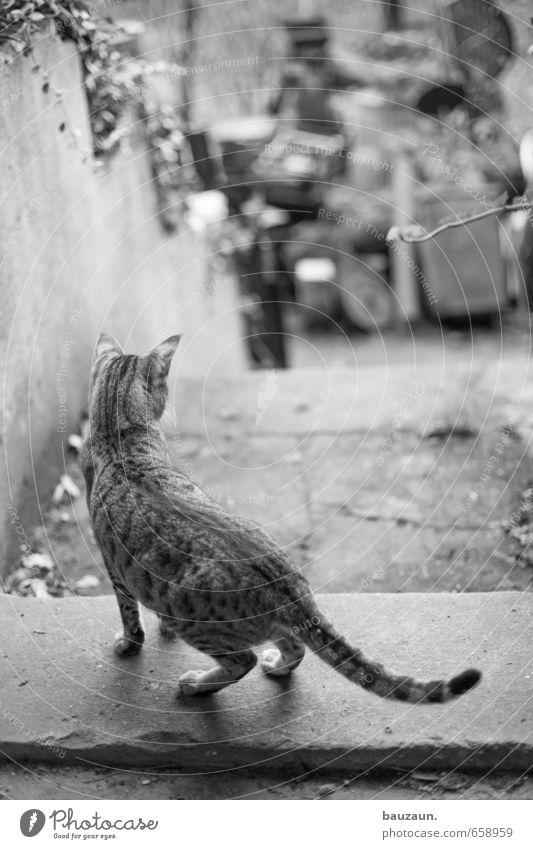 raus hier. Haus Garten Pflanze Efeu Mauer Wand Treppe Tür Wege & Pfade Tier Haustier Katze 1 Beton beobachten stehen Neugier trashig Mut Tatkraft Tierliebe