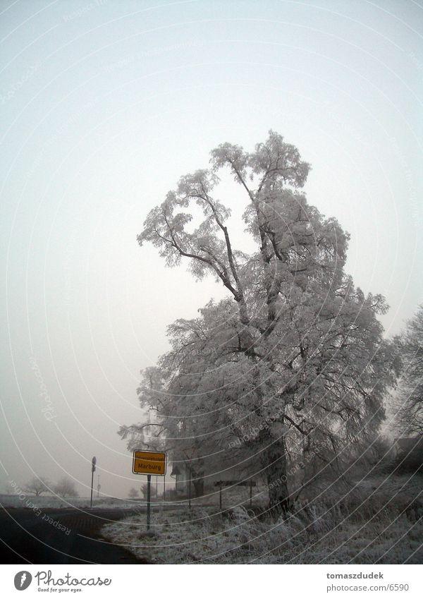 Winter in Marburg Baum kalt Frost Stadteingangsschild