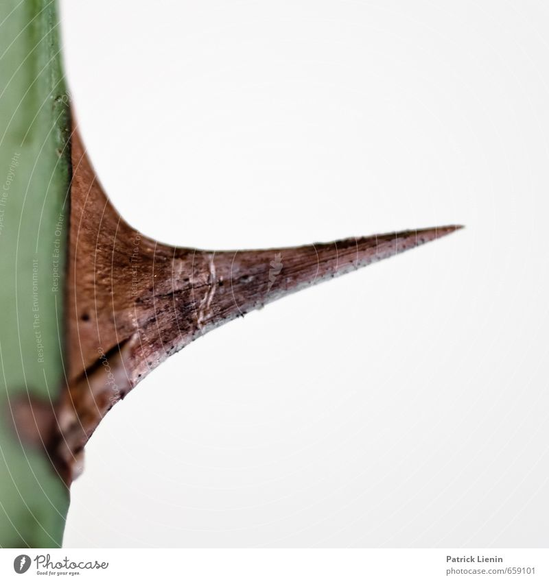 Dorn im Auge Pflanze Umwelt Kraft Sträucher gefährlich bedrohlich Kreativität dünn Kontakt Kontrolle Stress bizarr komplex stechen