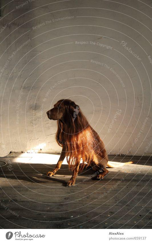 STUDIO TOUR | Haarpflege ist eine der ersten Pflichten Hund schön Freude Tier lustig Haare & Frisuren Holz außergewöhnlich Mode Stimmung Raum blond sitzen warten ästhetisch beobachten