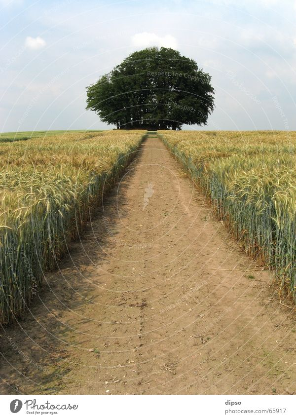 Der Weg zum Grabhügel ... Baum Sommer Wege & Pfade Feld Ziel Fußweg Kornfeld Fluchtpunkt geradeaus Feldrand Fluchtlinie