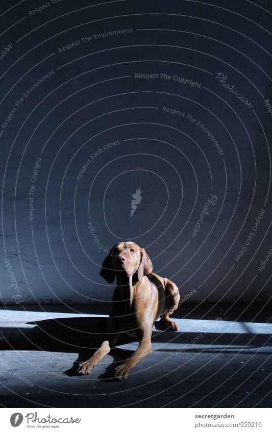 STUDIO TOUR | braver hund. Hund blau Tier dunkel braun liegen Raum Zufriedenheit warten Neugier Vertrauen Haustier Ausdauer gehorsam gehorchen