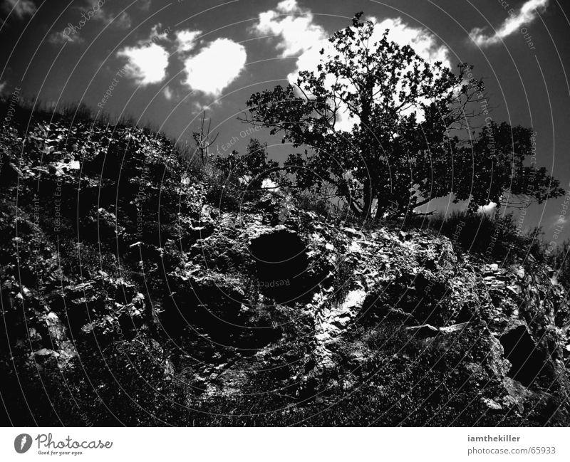 rise Natur Himmel Wolken Felsen Sträucher Vergänglichkeit Wildnis