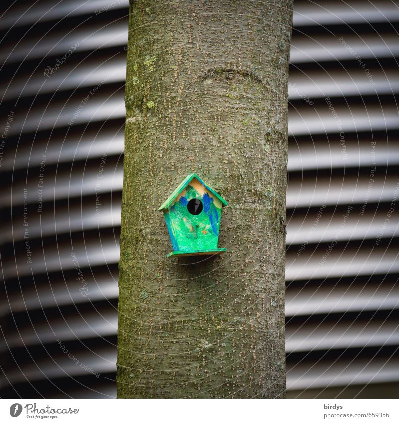 Vogelhaus Baum Baumstamm Futterhäuschen Nistkasten außergewöhnlich klein lustig graphisch niedlich Farbfoto Außenaufnahme Menschenleer Tag