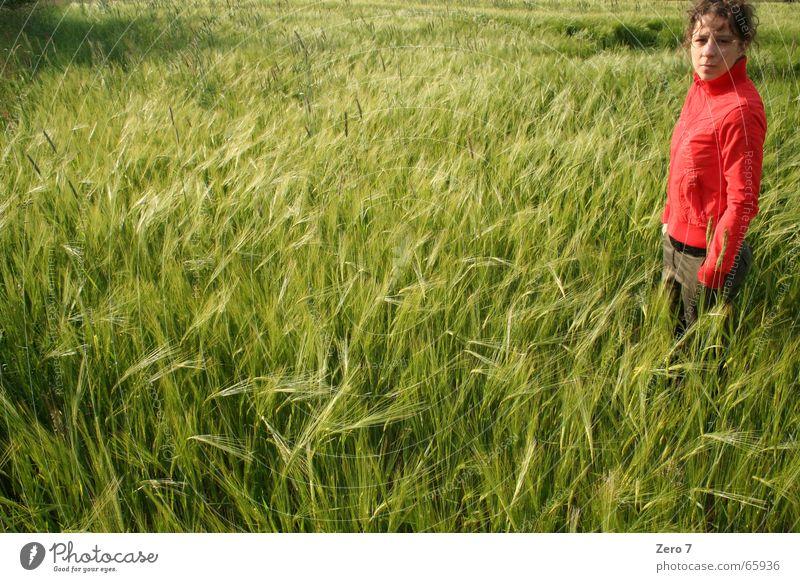 Doch ne Serie rot Sommer Farbe Wiese Feld Getreide Korn Schönes Wetter