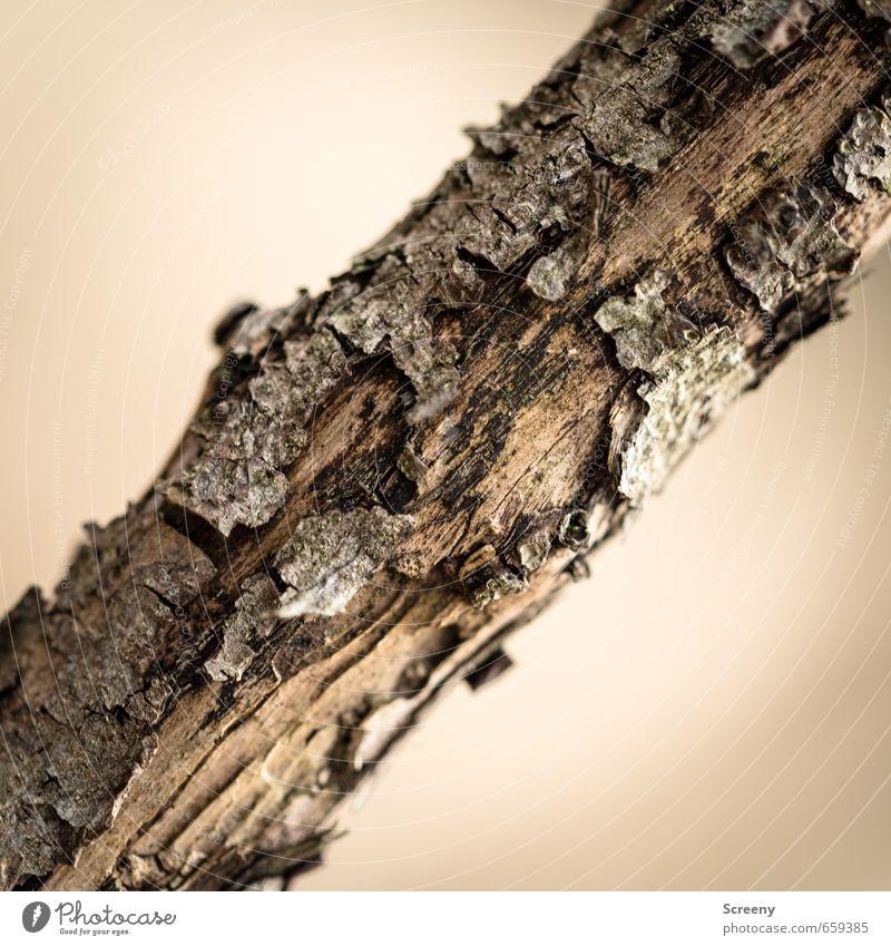 Quergestellt Natur Baum Holz braun Umwelt Verfall Vergänglichkeit Baumrinde verwittert Ast quer Strukturen & Formen Farbfoto Detailaufnahme Menschenleer Tag