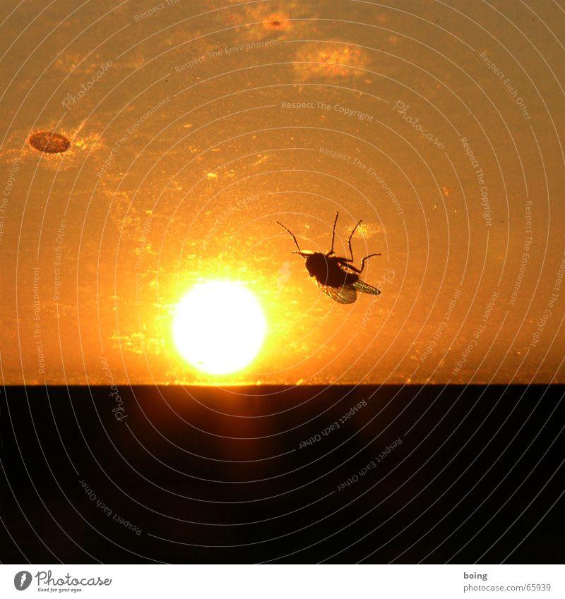 einfach mal die Sonne auf den Bauch brennen lassen Fliege Insekt Vergänglichkeit Sonnenbad Sonnenuntergang Duell Sonnenbank Kopfstand