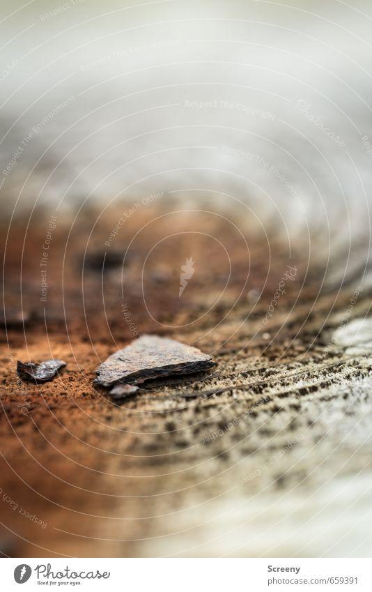Fragmente des Alters Umwelt Natur Baum Stein Holz Rost alt braun grau Senior Vergänglichkeit Altersringe Baumstumpf Schiefer Kreis Strukturen & Formen Farbfoto