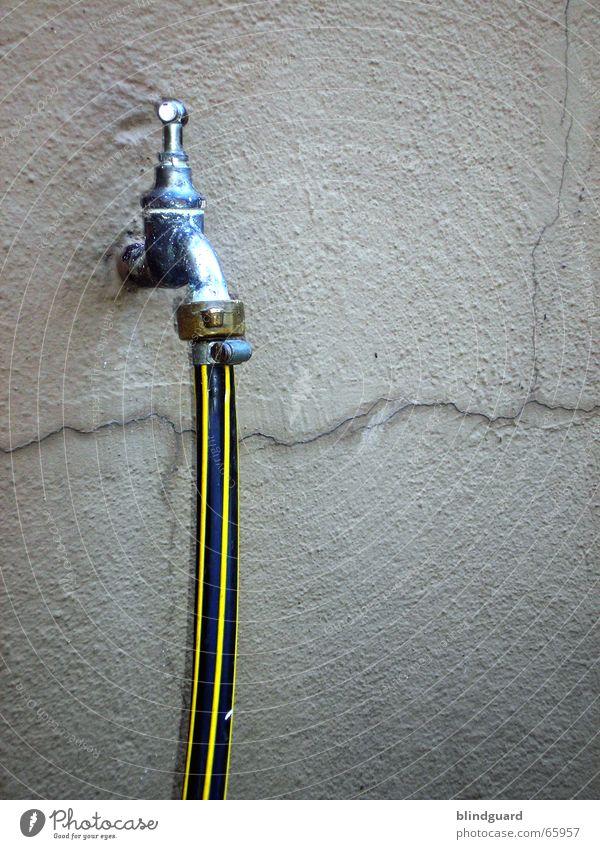 Heute wieder aufgedreht. Pflanze Sommer Wasser schwarz gelb Wärme Wand Leben Garten Regen Blühend Physik Erfrischung Riss Putz spritzen