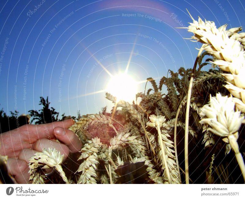 dry country Aussaat Ähren trocken Hand Landwirtschaft Korn heiß Physik Sommer Vollkorn Weizen blenden grell Getreide Ernte getrocknet Sonne Himmel Wärme sun