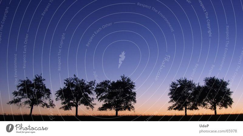 Scherenschnitt Baum Apfelbaum Abend 5 rot Silhouette Himmel Abenddämmerung blau