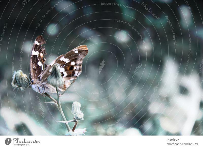 Starr Blume kalt Tod Insekt Schmetterling bewegungslos Totenstarre