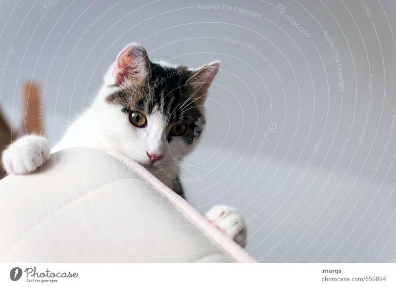Beobachten Innenarchitektur Tier Haustier Katze Tiergesicht 1 Tierjunges beobachten liegen Blick niedlich Ausdauer standhaft Farbfoto Innenaufnahme Menschenleer