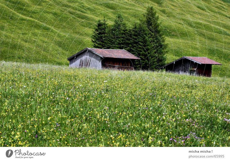 Sommer-Wiesen-Bäume-Hütte Baum Blume grün Ferien & Urlaub & Reisen ruhig Erholung Berge u. Gebirge wandern