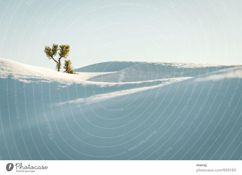 Y Himmel Natur weiß Pflanze Einsamkeit Landschaft ruhig Winter Berge u. Gebirge Schnee Herbst Eis leuchten Sträucher stehen Schönes Wetter