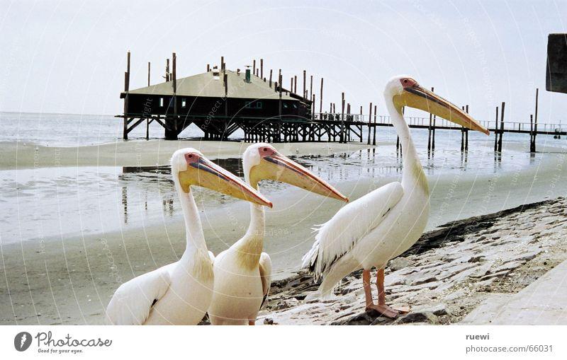 Fisch? Meer Strand Ernährung Tier Sand Vogel Küste Tiergruppe Afrika Wunsch Sehnsucht Appetit & Hunger Lust Kies Begierde