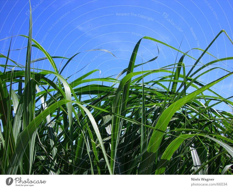 Grün unter Blau Himmel grün blau Pflanze Wiese Wind Sträucher