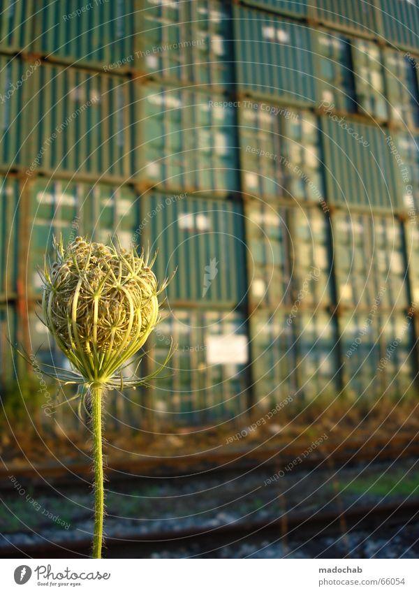 HOCHSTAPLER CONTAINER-IDYLLE IN GRÜN Natur schön Blume grün Pflanze Blüte Landschaft Eisenbahn Industriefotografie Gleise Idylle Kasten Kiste Container