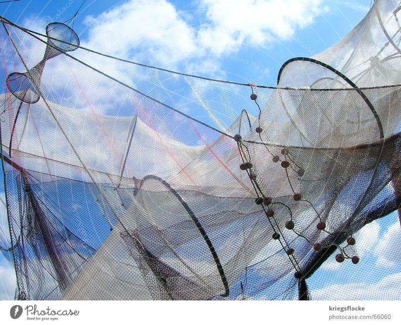 Perlenkette Wolken weiß Synthese wichtig Futter Ernährung Fischer Fischernetz Wasserfahrzeug Segelboot Meer Tier Himmel blau Netz Nähgarn Seil Kette
