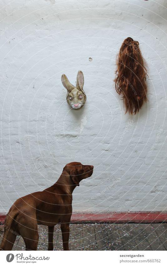 STUDIO TOUR | die qual der wahl. Hund weiß Tier Wand lustig braun Neugier Ostern Maske Haustier Irritation hängen trashig skurril Hase & Kaninchen Auswahl