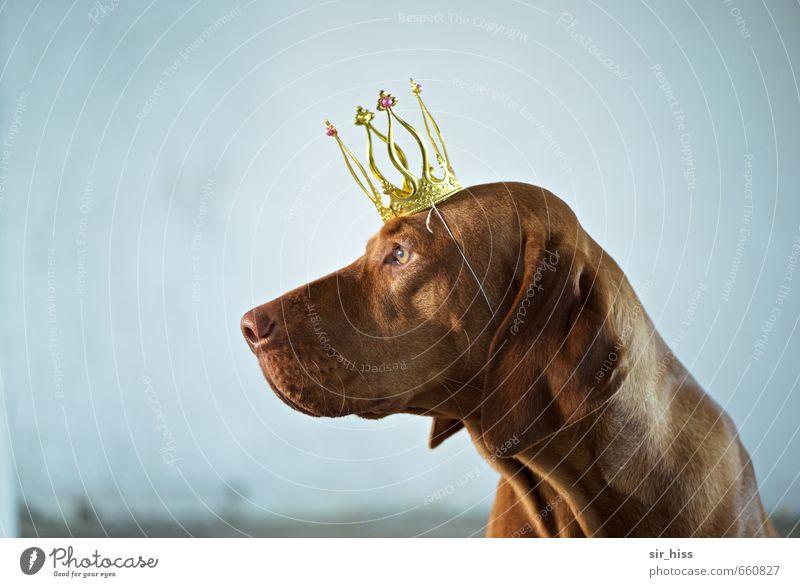 STUDIO TOUR | King Bensley Hund blau ruhig Tier braun gold elegant sitzen Erfolg verrückt ästhetisch genießen beobachten Sicherheit dünn trendy