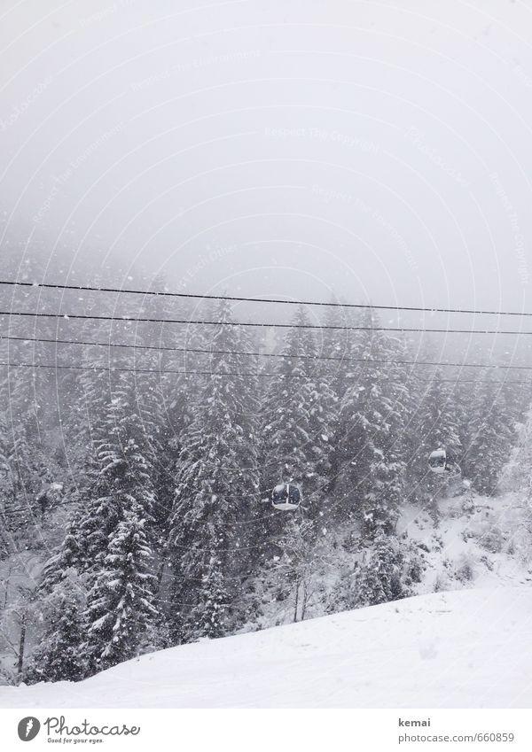 Gondelchen Umwelt Natur Landschaft Pflanze Urelemente Wolken Winter Wetter Nebel Eis Frost Schnee Schneefall Baum Fichte Tanne Fichtenwald Skipiste Gondellift
