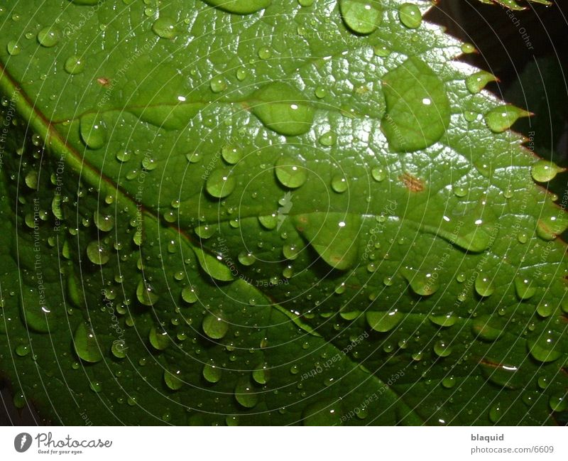 Blatt Fototechnik Wassertropfen