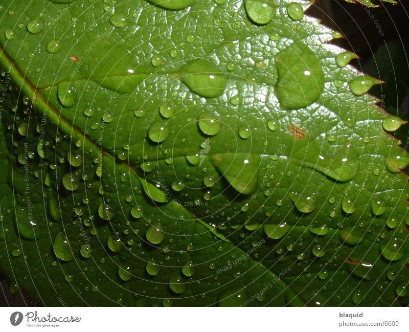 Blatt Wassertropfen Fototechnik