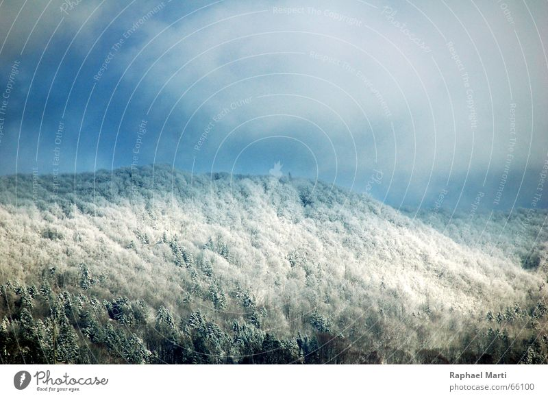 Snowy Laegern Winter Wald Schnee schweitz Berge u. Gebirge Himmel Alpen Landschaft