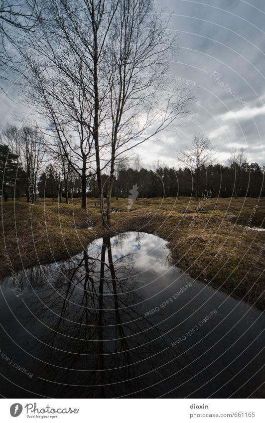 Die Hölle Natur Baum Landschaft Umwelt Traurigkeit Tod Gras authentisch Trauer historisch Hügel gruselig Frankreich Krieg Teich Entsetzen