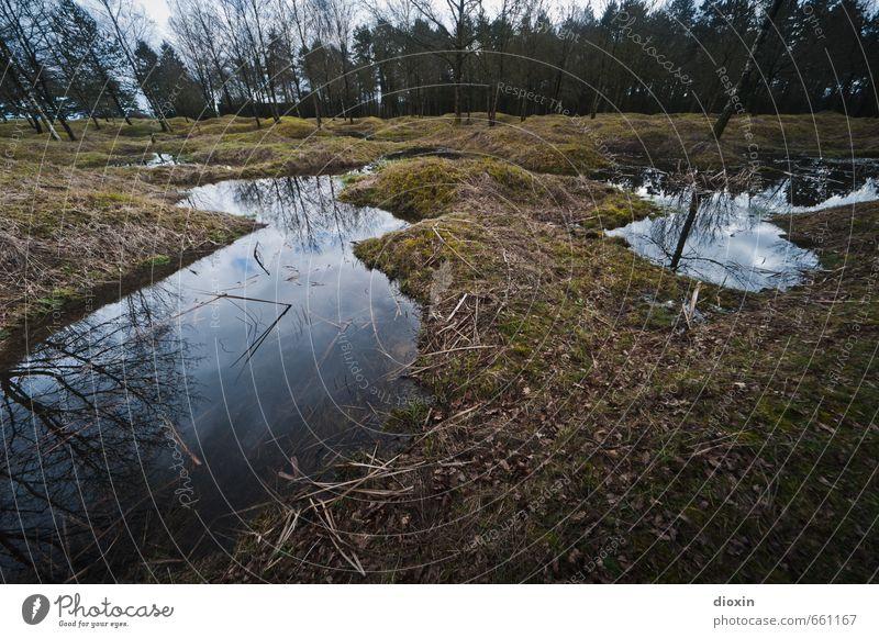 Die Hölle Umwelt Natur Landschaft Baum Gras Hügel Moor Sumpf Teich Verdun Frankreich authentisch gruselig historisch Traurigkeit Trauer Tod Entsetzen
