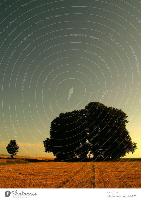 dipso ist schuld Wäldchen erinnern Denkmal Feld Stoppelfeld gerade zielstrebig dunkel Rücken