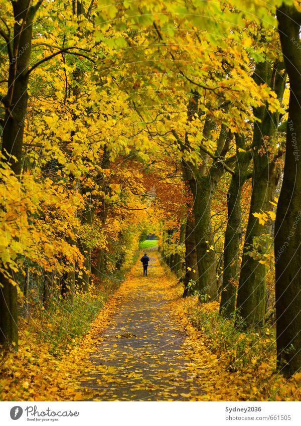 Der goldene Herbst Natur Pflanze Baum Landschaft Freude Wald Umwelt Sport Wege & Pfade Gras Park Zufriedenheit Wind Sträucher Schönes Wetter