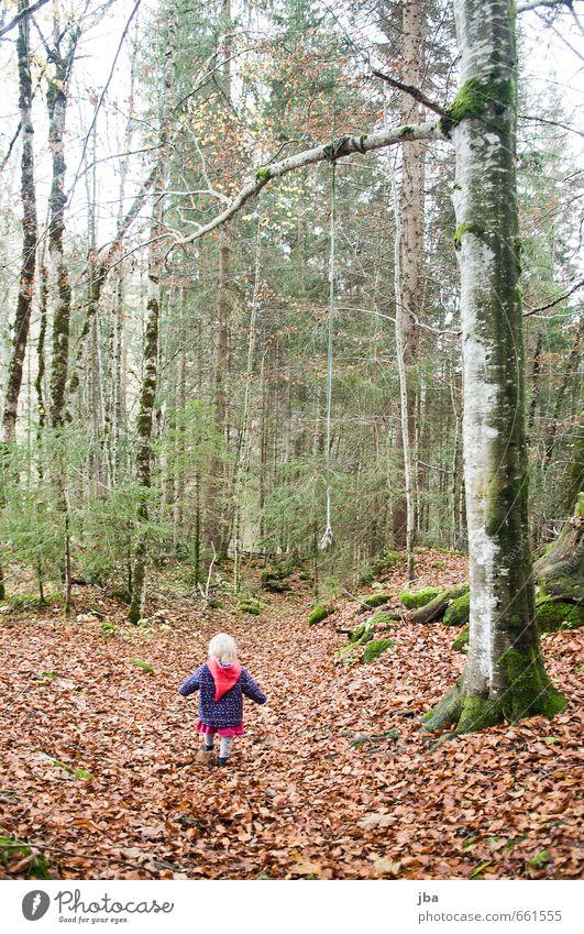 spatziergang im Wald Leben Abenteuer wandern Kindererziehung feminin Kleinkind Mädchen Kindheit 1 Mensch 1-3 Jahre Natur Pflanze Herbst Nebel Baum Blatt