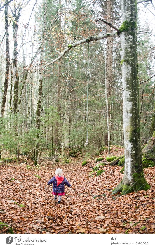 spatziergang im Wald Mensch Kind Natur Pflanze Baum Mädchen Blatt Leben feminin Herbst Freiheit Nebel trist Kindheit wandern