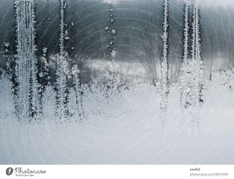 Andeutung Natur Winter Eis Frost Pflanze Sträucher Zweige u. Äste schemenhaft Fenster Fensterscheibe Glasscheibe Blühend authentisch kalt nah Spitze stachelig