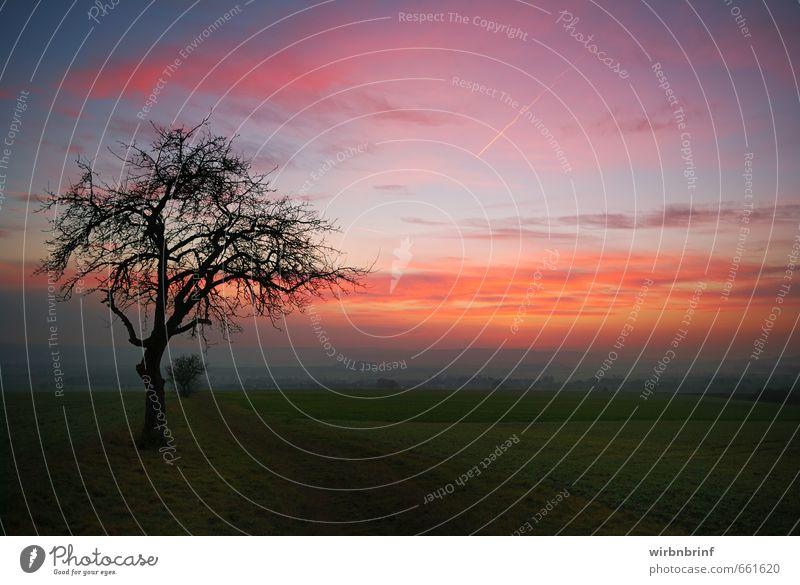 In der Dämmerung Umwelt Landschaft Wolken Sonnenaufgang Sonnenuntergang Herbst Baum Feld Menschenleer Wege & Pfade Erholung Unendlichkeit Gefühle ruhig Farbfoto