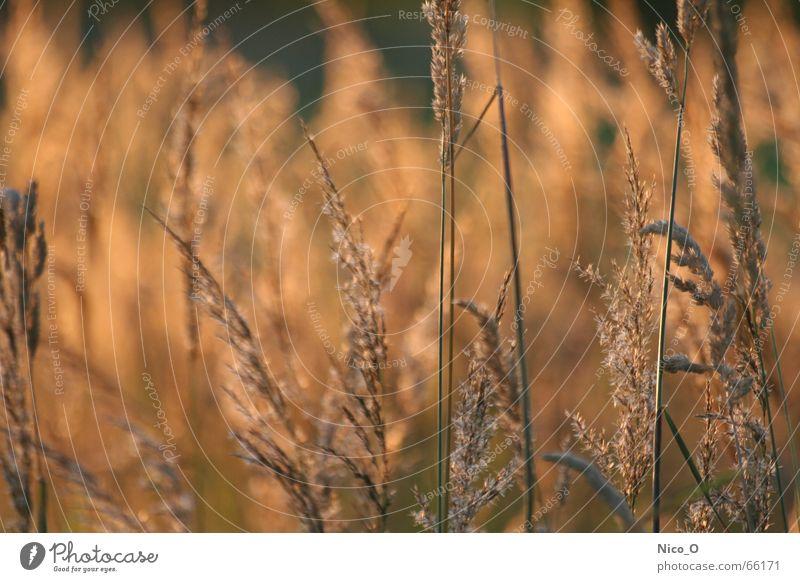 Trittbrettfahrer Feld Korn Kornfeld Nationalpark Mittelpunkt