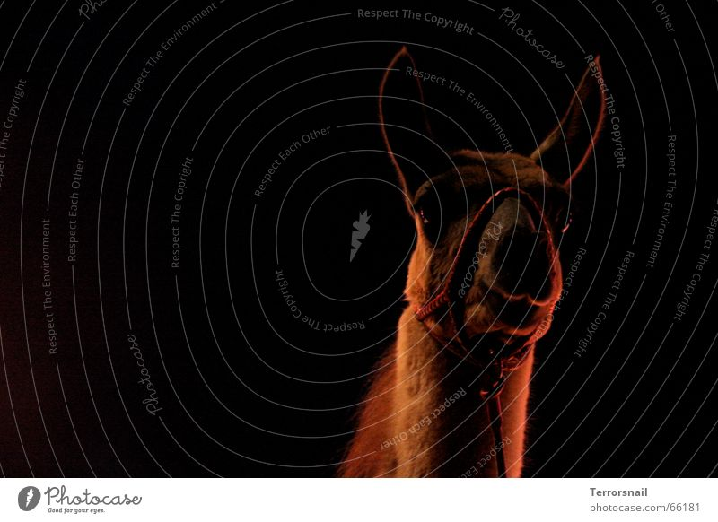 Ein Königreich für ... schön ruhig Tier Freiheit Denken elegant frei groß Show Neugier Frieden Wachsamkeit tierisch Zirkus Anmut friedlich