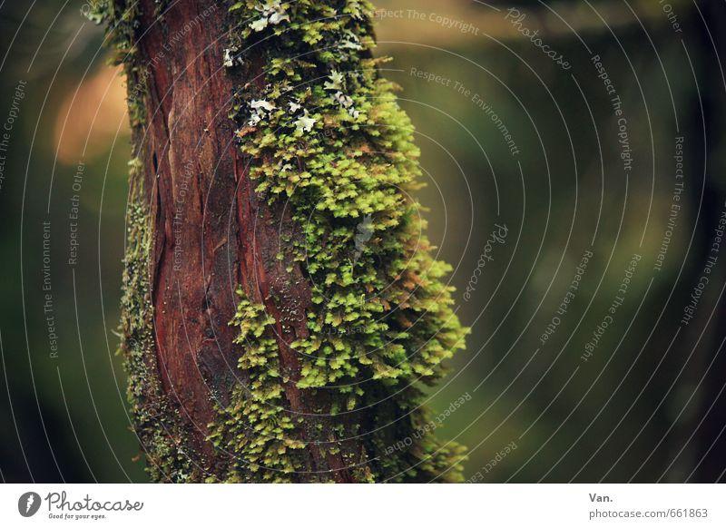Rot-Grün Natur Pflanze Moos Baumstamm Wald braun grün rot Farbfoto mehrfarbig Außenaufnahme Nahaufnahme Detailaufnahme Menschenleer Tag Kontrast
